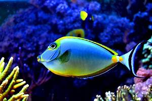 Colorful Tropical Colourful Fish | colorful fish in the ...
