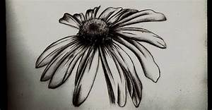 Wilted Daisy- pencil sketch by Tallis on DeviantArt