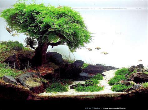 aquascape aquarium daquascape japonais aquariums