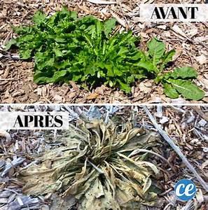 Vinaigre Blanc 14 Desherbant : 18 astuces de jardinage qui vont vous simplifier la vie ~ Melissatoandfro.com Idées de Décoration