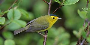 As World Gathers for Migratory Bird Day, Habitat Being ...
