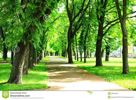 Nice Path In Beautiful Park With Many Green Trees Stock
