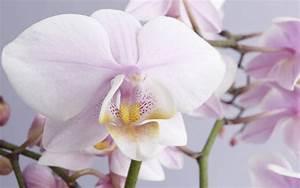 Schöne Orchideen Bilder : wie sie orchideen richtig pflegen ~ Orissabook.com Haus und Dekorationen