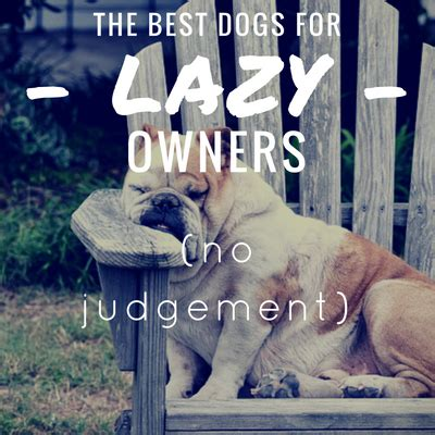 best for owners 7 best breeds for lazy owners lazy loving it