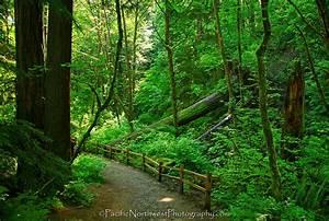 Forest Park in Portland, Oregon Oregon