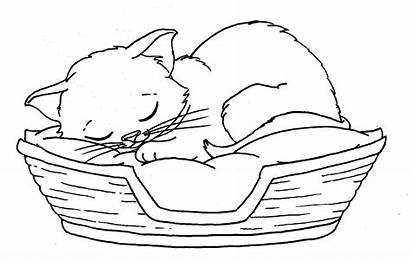 Coloring Pages Kitten Bobcat Turkey