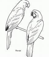 Coloring Parrot sketch template