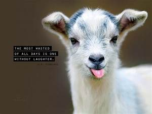 Laughter Desktop Wallpaper - Free Animals Backgrounds