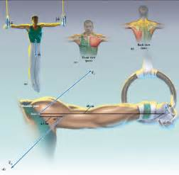 Solved  In Gymnastics  It Is Typical For The Male Athletes