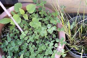 Garten Im März : der yok garten im m rz ye olde kitchen food und ~ Lizthompson.info Haus und Dekorationen