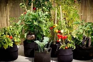 Quand Planter Les Tomates Cerises : jardin potager soins et conseils pour l 39 39 hiver ~ Farleysfitness.com Idées de Décoration