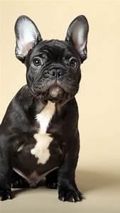 wallpaper bulldog puppy animals 4k animals
