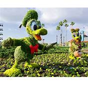 Kermit And Miss Piggy Topiaries At Epcot International