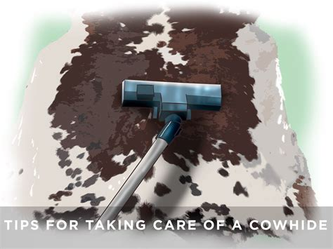 How To Care For A Cowhide Rug by Top Tips For Taking Care Of A Cowhide Rug Cowhides Direct