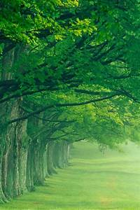 Green Tree Protection Eye iPhone wallpaper Free, iPhone 4