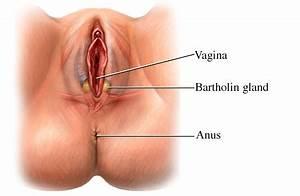 Bartholin's glands. Causes, symptoms, treatment Bartholin ...