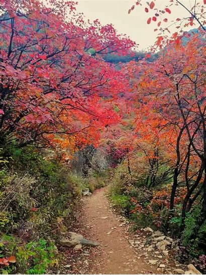 Scenery Chinadaily Autumn Taihang Cn China Handan