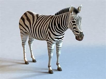 3d Animal Zebra Modeling Models Cadnav Object