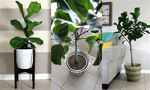 Home, Project, Pots, For, Indoor, Plants