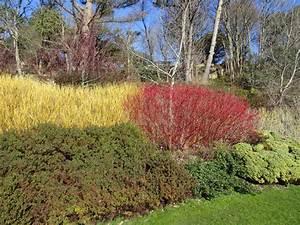 Rote Johannisbeeren Schneiden : roter hartriegel als hecke anlegen so klappt 39 s ~ Lizthompson.info Haus und Dekorationen