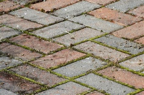 removing weeds between pavers thriftyfun