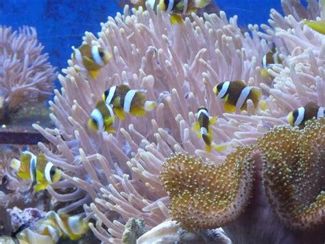 un poisson clown dans an 233 de mer les bonnes pratiques paperblog