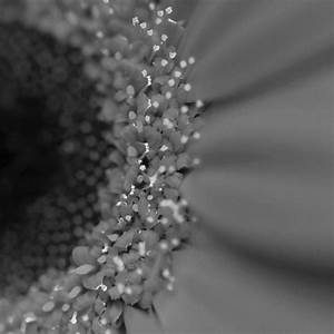 Black And White Flowers Tumblr Background