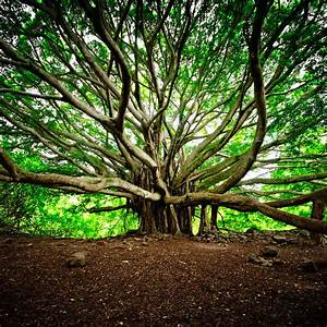 Plus D Arbres Plus De Vie : 18 of the most beautiful trees in the world blazepress ~ Medecine-chirurgie-esthetiques.com Avis de Voitures