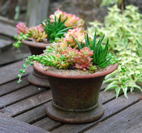 succulents in a pot succulents garden foreplay