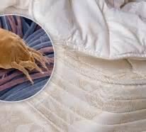 Milben Im Teppich by Was Sind Milben Milben Im Bett Bek 228 Mpfen