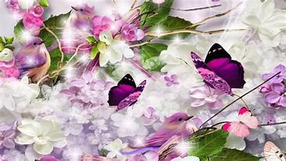 Lilac Lilacs Wallpapers Bird Desktop Background Birds