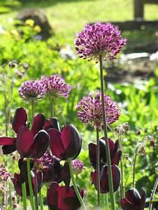 Heidelbeeren Pflanzen Zeitpunkt : 25 trendige lila garten ideen auf pinterest lila pflanze lila pflanzen und weg mit lila pflanzen ~ Orissabook.com Haus und Dekorationen