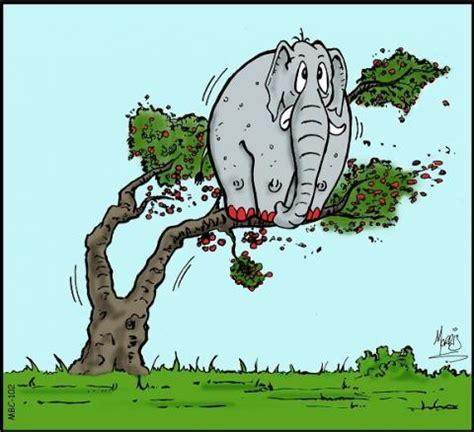 elephants  cherry trees learnenglish kids british