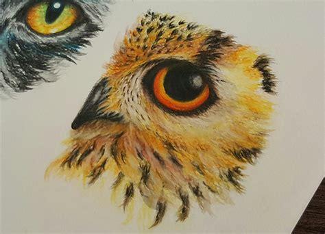 drawing  owl eye  watercolor pencils   draw