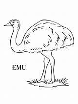 Emu Coloring Pages Drawing Para Australia Printable Colorear Template Birds Imagen Sketch Es Colors Supercoloring Bright Templates Desde Guardado Google sketch template