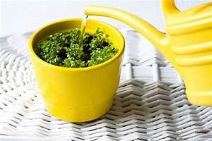 Feucht Werden Tipps : kr uter im topf tipps f r das pflanzen und pflegen ~ Lizthompson.info Haus und Dekorationen