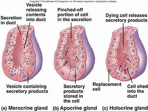 Types Of Glands