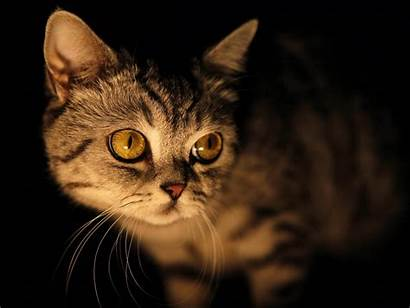 Cat Eyes Yellow Wallpapers Backgrounds