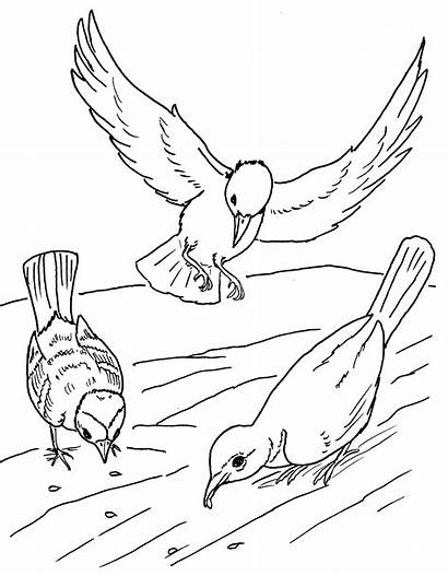 Sower Coloring Parable Birds Seed Pages Jesus