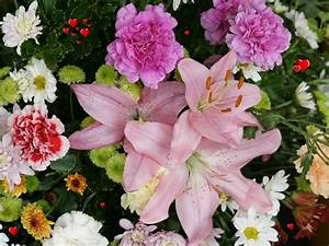 different beautiful flower wallpapers background wallpapers