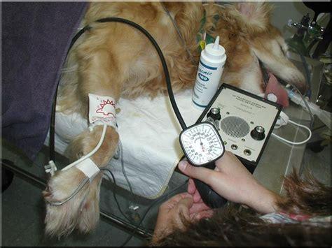VASG Doppler Blood Pressure Basics