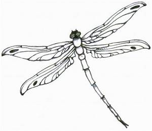 Delicate Dragonfly Clipart