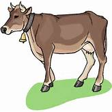 Indian Cow Clipart Images - ClipartFest | Indian Cow ...