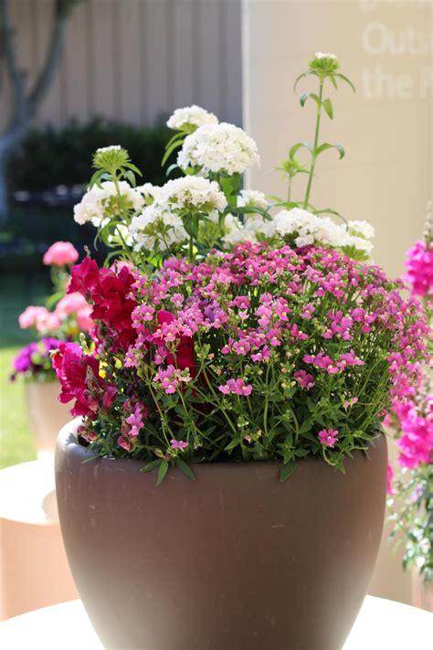 Choosing Fragrant Flowers And Plants Hgtv
