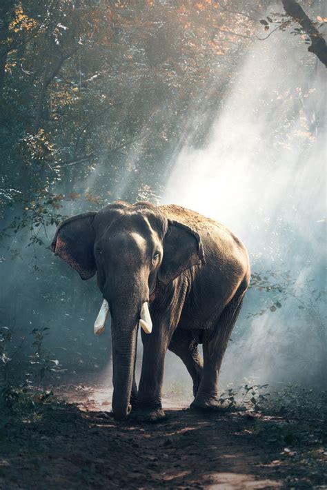wallpaper elephant mammal reserve hd  animals  wallpaper  iphone android