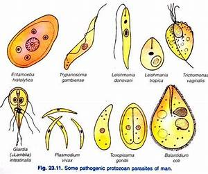 Protozoan Diseases and Humans
