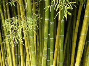 Bambus Im Winter : bambus erfroren oder vertrocknet ~ Frokenaadalensverden.com Haus und Dekorationen