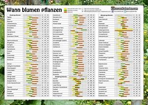 Wann Blüht Flieder : 135 besten blumen bilder auf pinterest englische rosen ~ Lizthompson.info Haus und Dekorationen