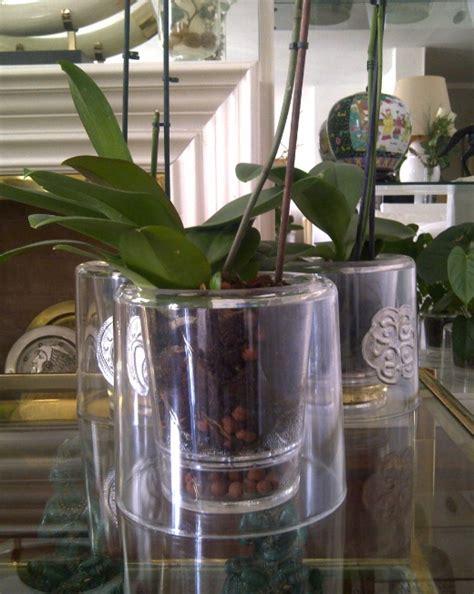 nos 6 meilleurs conseils pour prendre soin de vos orchid 233 es astuces de grand m 232 re