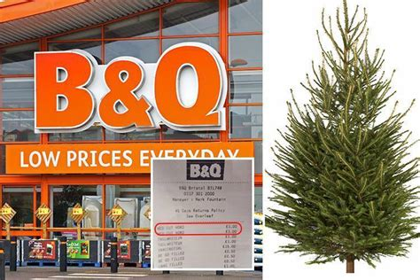b q slashes the price of real christmas trees worth 163 35 to
